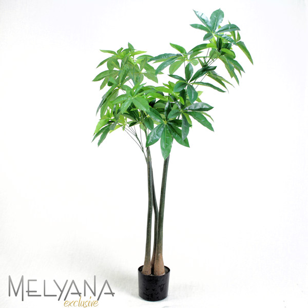 ARALIA PLANTA 230 FLS