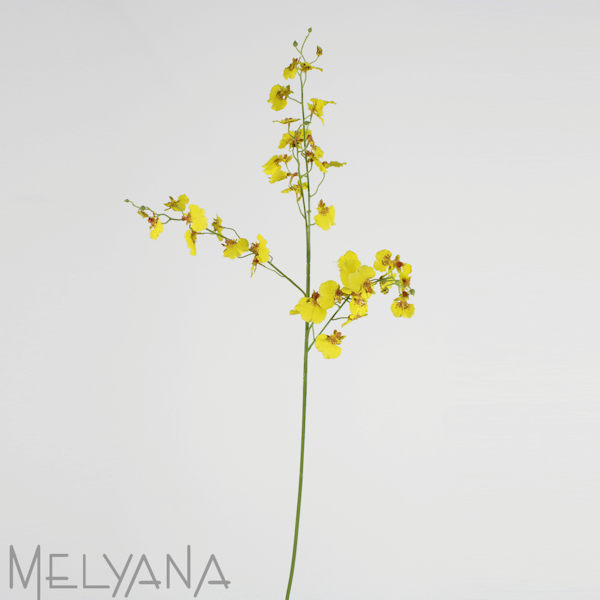 ONCIDIUM SPRAY